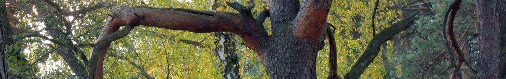panorama-pazdziernik-17